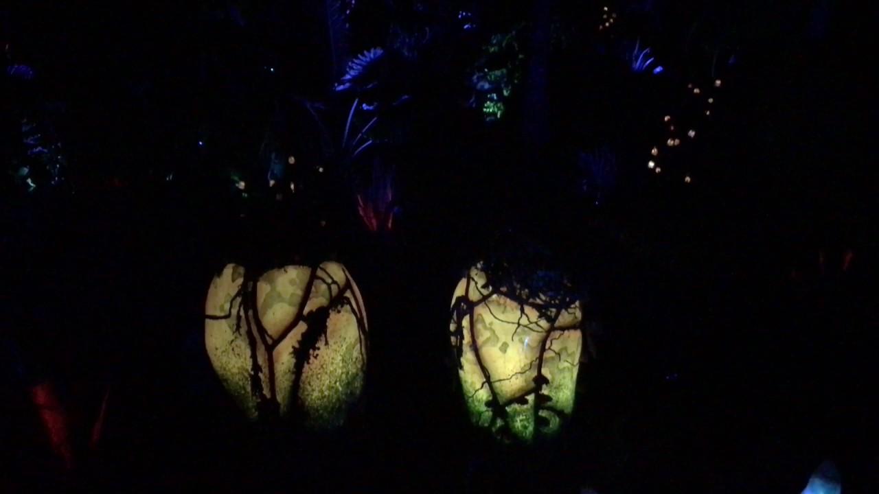 Pandora At Night Highlights