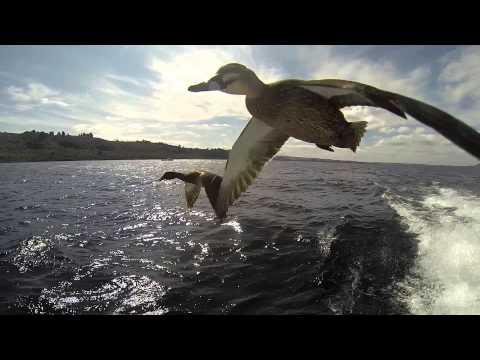 Flying Ducks - so close, you can almost touch, just incredible