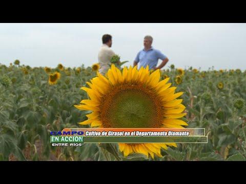 Esteban Merini - Asesor Privado - La rentabilidad del girasol es interesante, vale la pena el trabajo que demanda producirlo