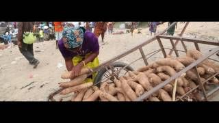 Seed Yam production and marketing