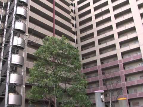 Japan earthquake rattles Tokyo buildings
