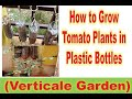 - How to Grow Tomato Plants in Plastic Hanging Bottle ll Vertical Gardening ll Space Saving Garden