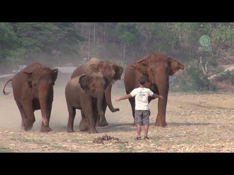 A Man Call Elephant