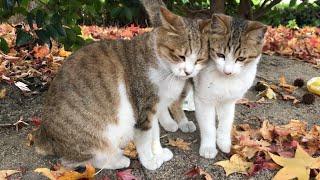公園猫ちゃん達の様子を毎日UP!チャンネル登録はコチラから↓ https://w...