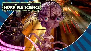 Horrible Science - Happy New Year! | Celebrating Science | Science for Kids