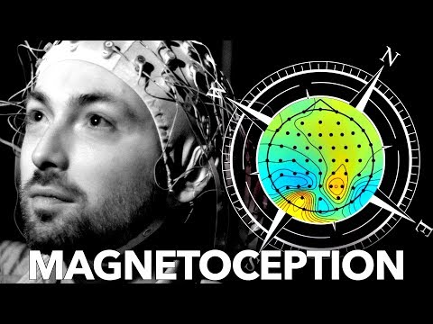 Can Humans Sense Magnetic Fields?