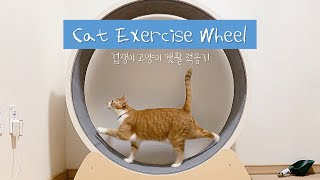 Cat Exercise Wheel / how my cowardly cats got to like it