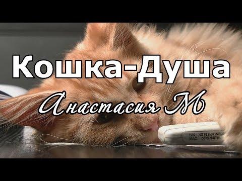 "Стихотворение ""Кошка-Душа"" - Настя_Че (Анастасия М)"