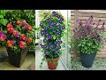 Inexpensive Annual Flowers for Your Garden