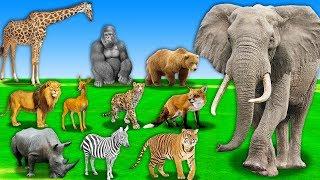 Lernen Tieres Namen und Klang-Tier, Essen Obst Cartoon für Kinder | Lernen Sie die Wilden Tiere Für Kinder