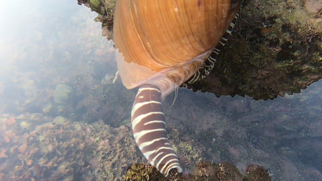 荒岛海鲜密集有几万,来叔发现成精的巨货比头大,底下还不止一个