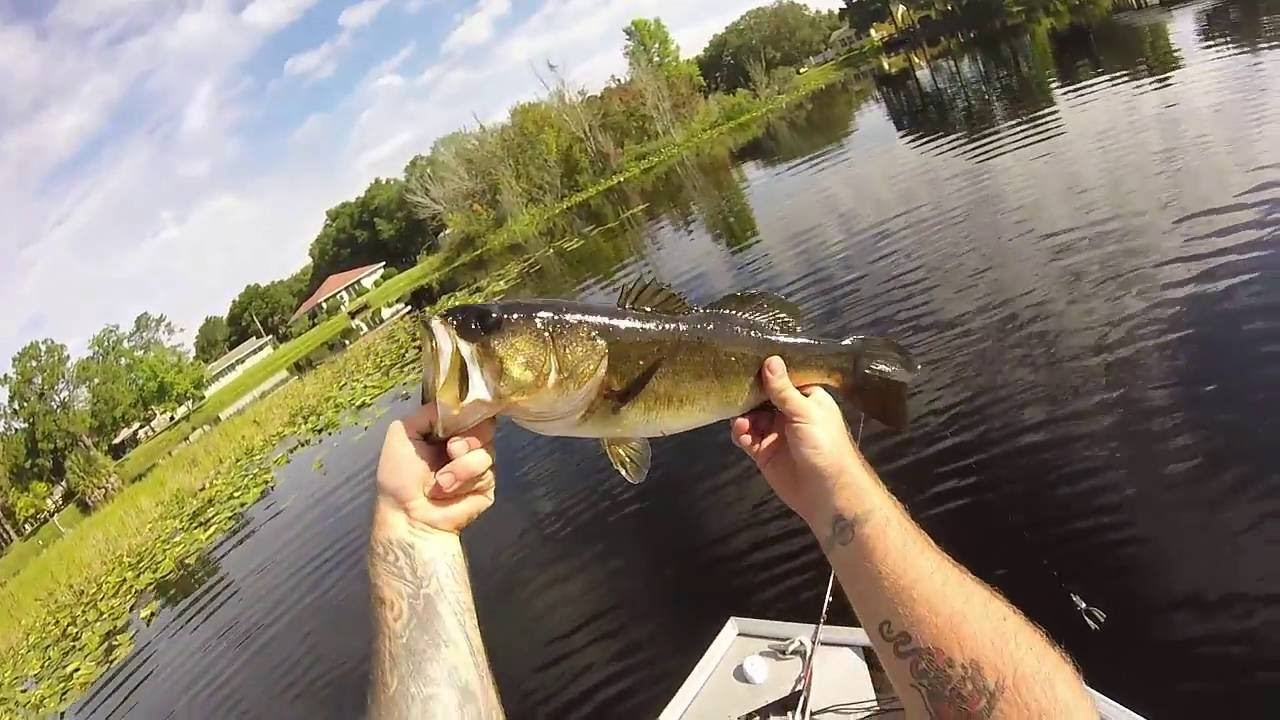 Central florida bass fishing gopro tsala apopka chain of for Buy florida fishing license online