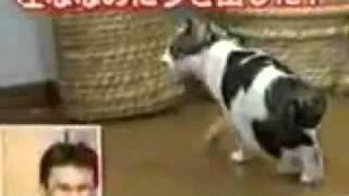 Что будет  если на кота наклеить скотч flv