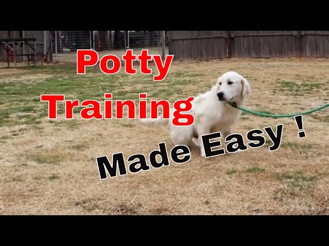 How to Easily Potty Train Your Puppy! Everything you need to know!