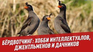 Бёрдвотчинг: хобби интеллектуалов, джентльменов и дачников - Шоу Картаева и Махарадзе