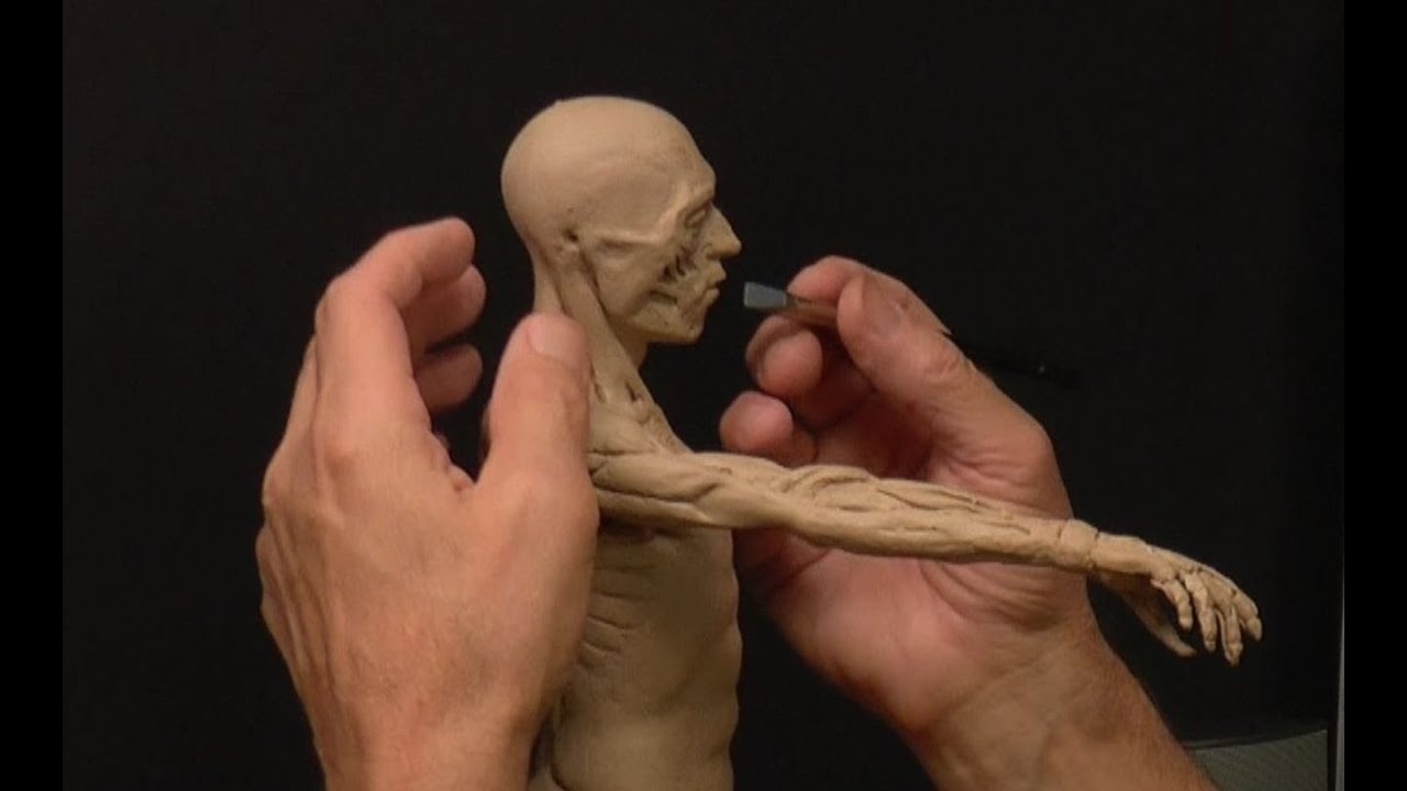 Human Anatomy Sculpture Ecorche 24fd Youtube