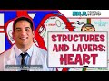 Cardiovascular | Structures and Layers of the Heart