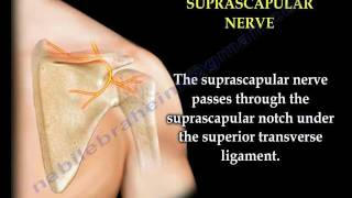 Shoulder Pain Injection Suprascapular Nerve Block - Everything You Need To Know - Dr. Nabil Ebraheim
