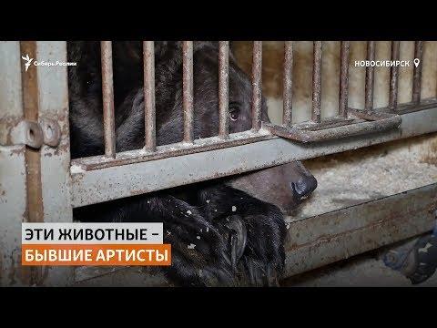 Новосибирский цирк выбросил на улицу четвероногих артистов-пенсионеров   Сибирь.Реалии
