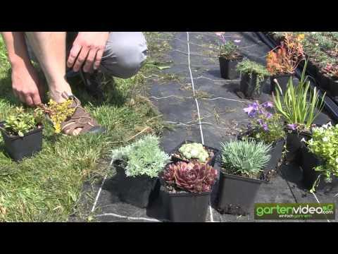 Pflanzbeispiele für Staudenkombinationen (Sedum, Sempervivum, Geranium)