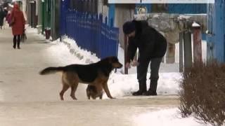 Лают и пугают. Новозыбковцы боятся ходить по улицам из-за собак