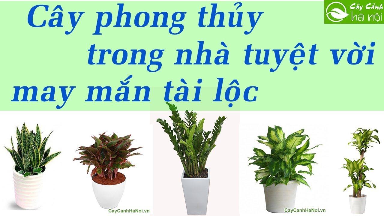 Những loại cây phong thủy trồng trong nhà tuyệt vời - May mắn tài lộc #1