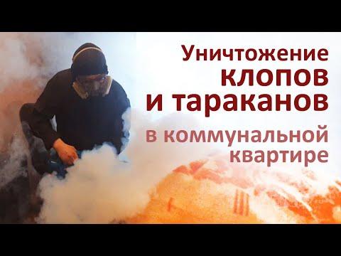 Видео: Уничтожение тараканов и клопов, Москва, Хорошёво-Мнёвники