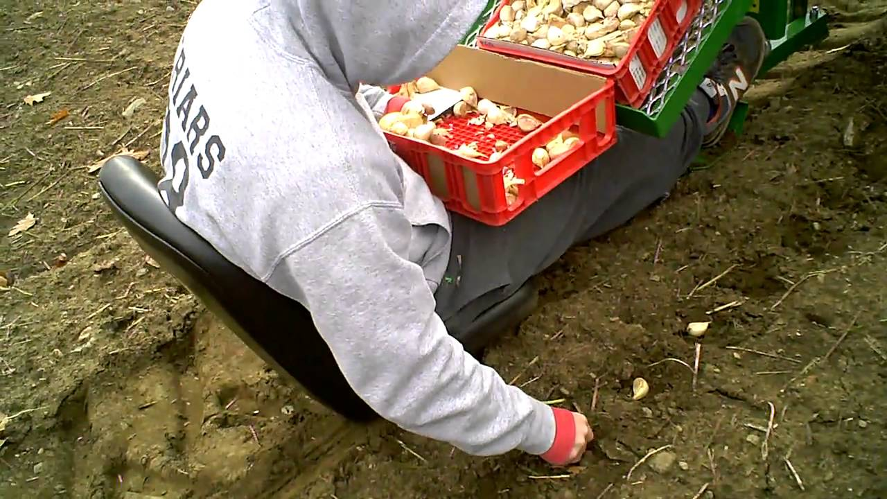 Planting Garlic With Water Wheel Transplanter Youtube
