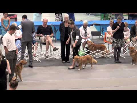 2013 Canadian Toller Specialty Best of Breed (post cut)