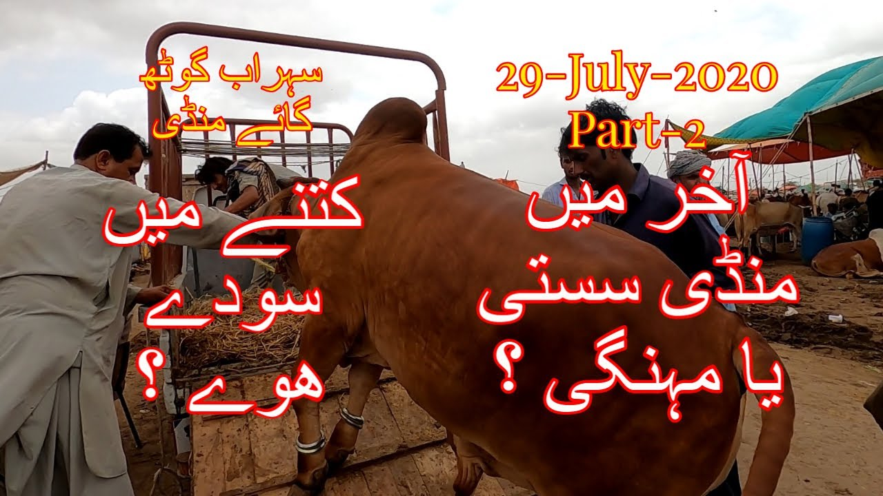Kitnay Me Soday Hoay - Sohrab Goth Cow Mandi Update 29-July-2020 Part-2