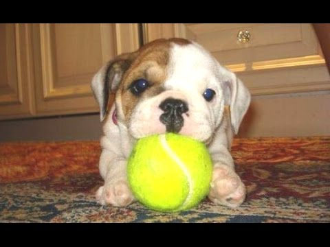 Funny Puppy Videos Compilation 2014