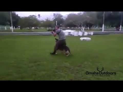 German Shepherd Dog (GSD) and Soldier Dancing to Por Una Cabeza - Omaha Outdoors