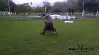 German Shepherd Dog (gsd) And Soldier Dancing To Por Una Cabeza - Omaha Outdoors