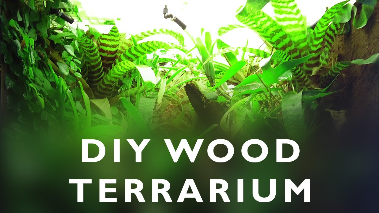 Diy Wood Terrarium For Dart Frogs Youtube