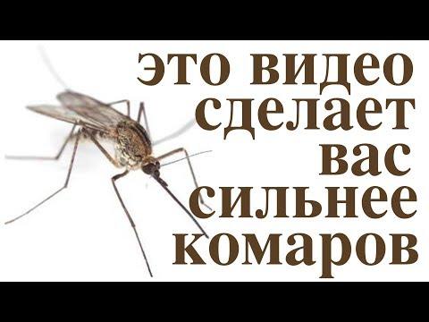 Волшебная защита от комаров! Не тратьте деньги на химию!