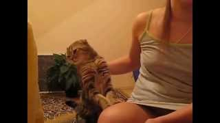 Кот  ласкается !!!