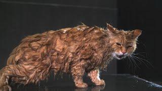Эти непростые животные. Фильм 1 | ЕХперименты с Антоном Войцеховским