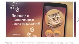 Переводчик слов на кошачий язык Вы не представляете на что способны эти мобильные приложения
