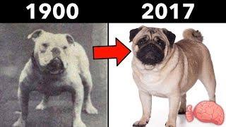 ¿Cómo Cambiaron Los PERROS EN 100 AÑOS? - 8 Razas Antes y Ahora