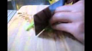 Cutebokchoi's Cooking Tips: How To Cut Spring Onion Into Strips