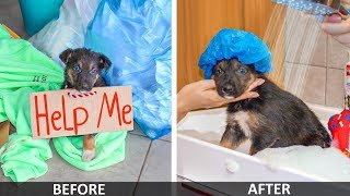 DIY Pet Hacks! Lonely Puppy On Street | Creative Life Hacks for Your Dog