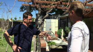 An Edible Landscape & Garden in Phoenix, Arizona