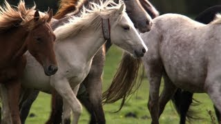 "Pony Drift: The British ""Wild West"" 