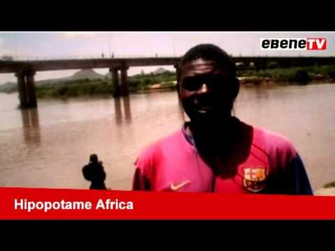 Hippopotame Africa-Garoua