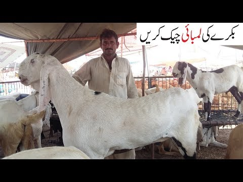 mondra in gujranwala 2011 | FunnyCat TV