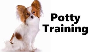 How To Potty Train A Papillon Puppy - Papillon House Training Tips - Housebreaking Papillon Puppies