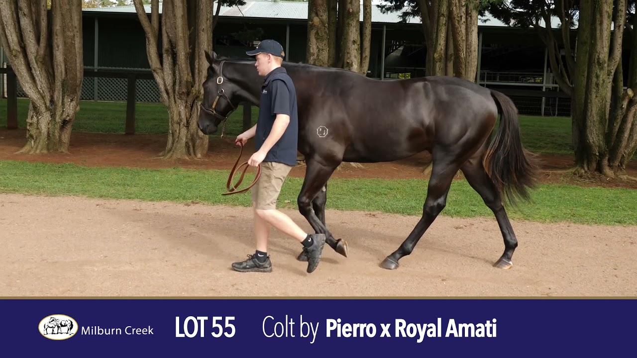 Lot 55 Easter Yearling Sale