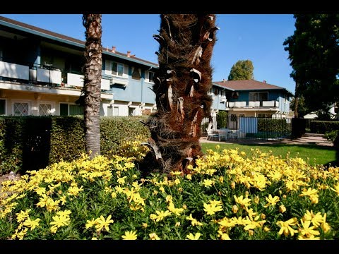 Sunnyvale Apartment For Rent - 2 Bed 1 Bath - by Property Management in Sunnyvale CA