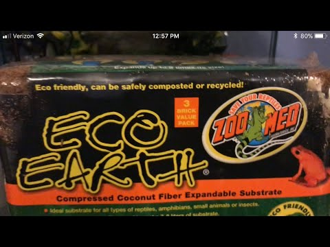 Getting eco earth for my gecko!