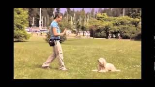 Gooddogbehavior.com - Hollywood Dog Trainer's Dog Training Online